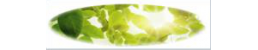 Green Vision & Associates